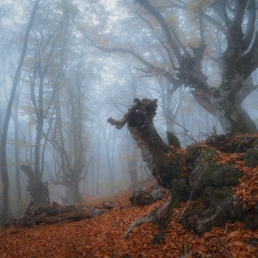 Crimea : foggy forest at Demerdji